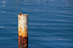 Kingfisher on pillar on Mediterranean sea. Royalty Free Stock Photography