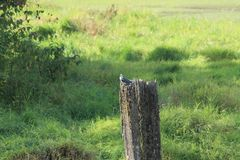 Kingfisher on a post Royalty Free Stock Photos