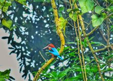 A Kingfisher is sitting on the branch of tree. royalty free stock images