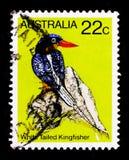 Kingfisher Tanysiptera sylvia рая буйволовой кожи-brested, serie птиц, около 1980 Стоковые Фото