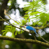 Kingfisher in Tree Stock Images