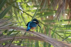 A kingfisher on a tree in the park royalty free stock photos