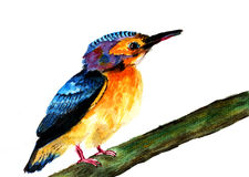Kingfisher watercolor sketch. On paper Royalty Free Stock Image