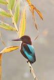 Kingfisherfågel royaltyfri foto