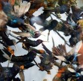 Kingfishers и другие птицы Стоковое Изображение