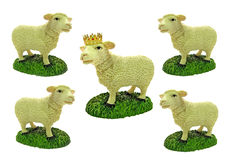The kingpin. Photo of a group of sheep with center one wearing a golden crown, symbolising a kingpin or most important person in a group or business Stock Photos