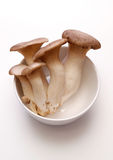 Kings Oyster Mushroom Stock Images