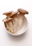 Kings Oyster Mushroom Stock Images