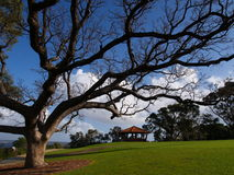 Kings Park Botanical Garden. A view of the Kings Park Botanical Garden in Perth, Australia Royalty Free Stock Image