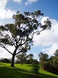 Kings Park Botanical Garden Royalty Free Stock Photos