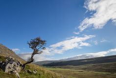 Kingsdale Tree, Yorkshire Dales, England Stock Images