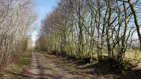Country lane between hedges walls in North Germany. A Kink or Hedged bank in German: Knick is a woody overgrown, mostly artificially built earth or stone wall Stock Image