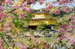 Kinkakuji Golden Pavilion, Kyoto, Japan royalty free stock photography