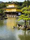 Kinkakuji guld- paviljong Royaltyfri Fotografi