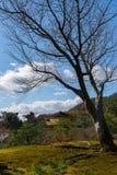 Kinkakuji im Herbst Lizenzfreies Stockbild