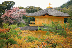 五颜六色的kinkakuji sakuras寺庙 免版税库存图片