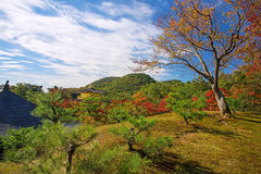 Kinkakuji temple with autumn leaves by aerial view Royalty Free Stock Image