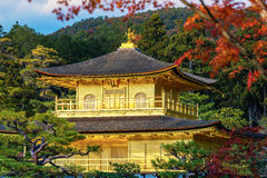 Kinkakuji Temple (The Golden Pavilion) with autumn maple Stock Photography