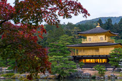 The Kinkakuji temple The Golden Pavilion in autumn with red ma Royalty Free Stock Photo