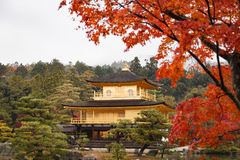 Kinkakuji temple, the goldern pavilion, Kyoto, Japan Royalty Free Stock Photo