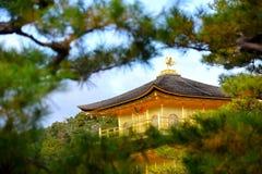 Kinkakuji temple. Looking through the pine tree to see Kinkakuji temple Stock Image