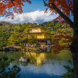 Kinkakuji Temple (The Golden Pavilion) with autumn maple in Kyot Stock Images