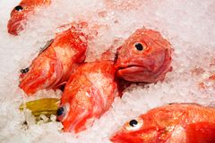 Kinmedai or Golden Eye Snapper on Ice, One of Popular Fish for m. Aking Sashimi. Japanese Delicacy of very Fresh Raw Fish Sliced into Thin Pieces Royalty Free Stock Photos