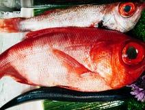 Kinmedai or Red Alfonsino or Beryx fresh fish for Japanese sushi royalty free stock photo