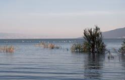 Meer von Galiläa. Stockfotografie