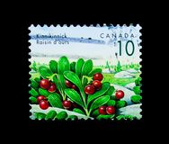 Kinnikinnick (Arctostaphylos uva-ursi), Definitives 1991-96: Edible Berries serie, circa 1992. MOSCOW, RUSSIA - MARCH 18, 2018: A stamp printed in Canada shows royalty free stock photo
