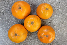 Kinnow. Citrus nobilis x Citrus deliciosa, sometimes listed as C. reticulata, a possible hybrid between King Tangor and Willowleaf mandarine, commonly stock images
