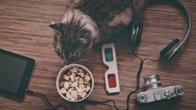 Kino und Unterhaltungs-Konzept, Katze umgeben durch Gegenstände für Unterhaltung stock footage