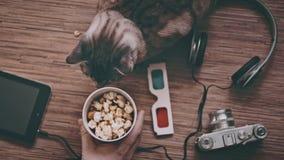 Kino und Unterhaltungs-Konzept, Katze umgeben durch Gegenstände für Unterhaltung stock video footage