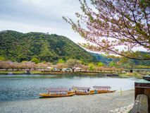 Kintaikyo historical wooden bridge in spring season with cherry blossom stock images