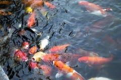 Kio japonês Foto de Stock Royalty Free