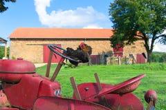 Kip bij het landbouwbedrijf Stock Afbeelding