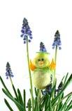 Kip in druivenhyacinten stock afbeelding