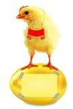 Kip en gouden ei. Royalty-vrije Stock Fotografie