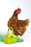 Kip met een mandhoogtepunt van eieren Stock Foto