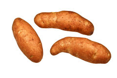 Kipfler Potatoes. The kipfler potato variety is elongated finger shapes with pale yellow skin and yellow flesh from Germany Stock Image