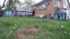 Kippen bij de huiswerf De Oekraïne, Podillya, Khmelnytskyi stock videobeelden