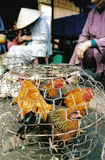 Kippen bij markt Stock Foto's