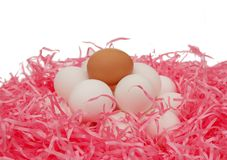 kippen eieren Royalty-vrije Stock Afbeelding