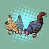 Kippen en haan Landbouwbedrijfvogel stock illustratie