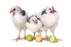 Kippen en paaseieren Royalty-vrije Stock Afbeeldingen