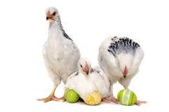 Kippen en paaseieren Stock Foto