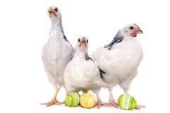 Kippen en paaseieren Royalty-vrije Stock Foto's