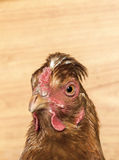 Kippen hoofdclose-up Royalty-vrije Stock Foto's
