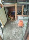 Kippen houten huis Stock Afbeelding
