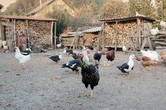 Kippen, kippen en eenden in werf stock foto